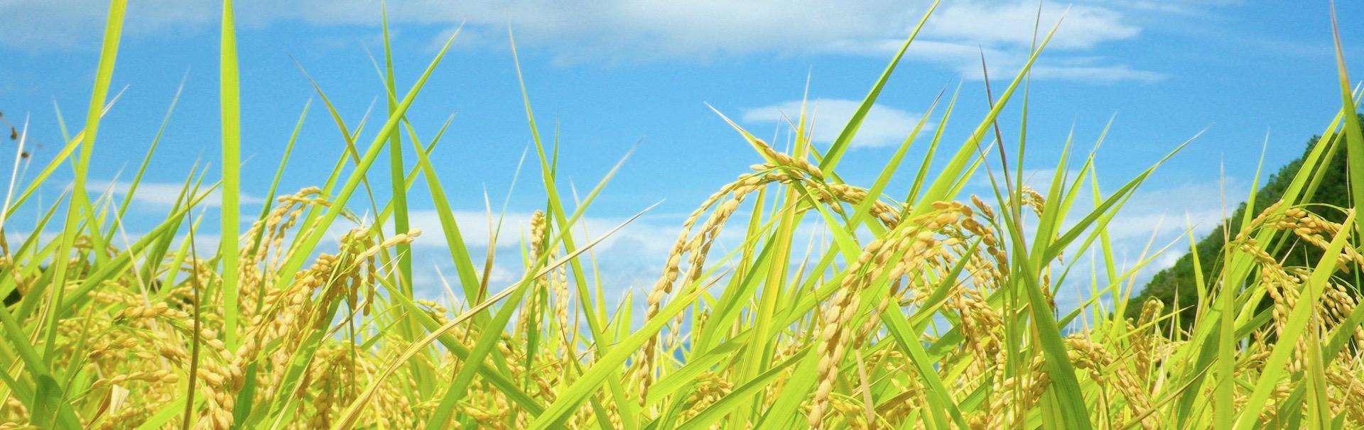 鳥取でスマート農業に挑戦中